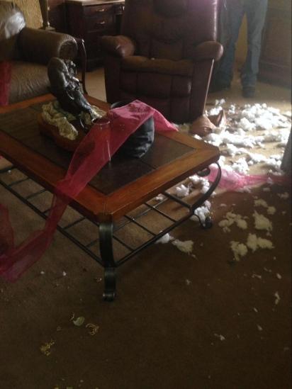 Quando Brenda Hofstad chegou em casa se deparou com a decoração natalina espalhada pelo chão. (Foto: Facebook/ Brenda Hofstad Hughes para Pet Shaming)
