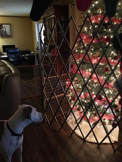 Para proteger a árvore de natal da destruição dos seus cães Brenda Hofstad investiu num cercado. (Foto: Facebook/ Brenda Hofstad Hughes para Pet Shaming)