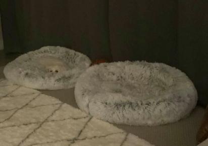 Bola de pelo misturada a uma cama felpuda, há um parzinho de olhos te mirando! (Foto: Facebook/Kristen Muir)