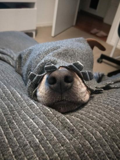 Se não fosse essa orelhinha de fora, eu jamais notaria a presença de um cão aqui! (Foto: Facebook/Harley Greco)