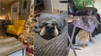 Sequência de fotos: descubra onde estão os cães. (Foto: Facebook/Brianna Bodin | Facebook/Harley Greco | Facebook/Michelle Mabarak Steiner)