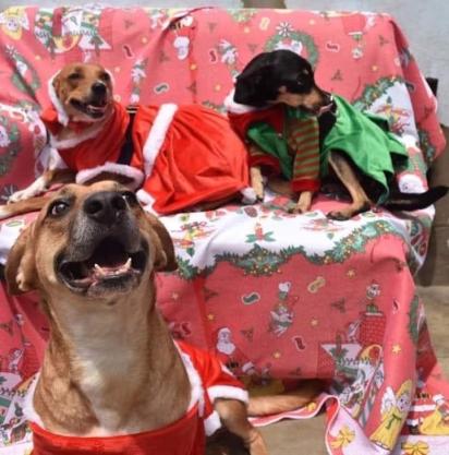 Paula Cecilia tem buscado recursos para o abrigo de animais através de vendas de roupas natalinas para pets. (Foto: Facebook/Paula Cecilia Alarcon Cruz)
