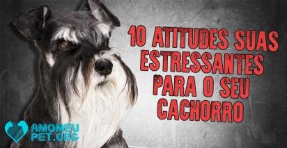 Criamos uma lista com 10 atitudes humanas que estressam os pets. (Foto: Amo Meu Pet)