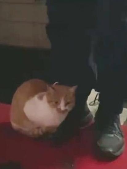 Desde que foi resgatado, independente do tempo o gatinho Lan Mao comparece na corporação para fazer companhia aos bombeiros.(Foto: Weibo/China News Guizhou Firefighting)
