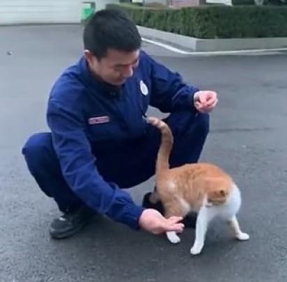 O carinho que os bombeiros tem pelo gatinho é recíproco. (Foto: Weibo/China News Guizhou Firefighting)