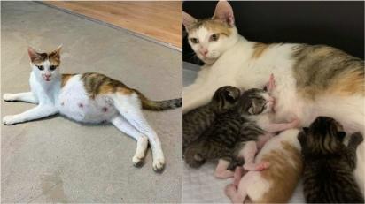 Gatinha prenha que vivia na rua é resgatada e dá à luz oito filhotes em escritório. (Foto: Arquivo Pessoal/Angela Sy)