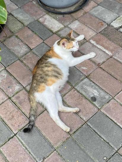 A gatinha foi nomeada Boba, por estar muito redonda. (Foto: Arquivo Pessoal/Angela Sy)