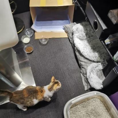O pessoal do escritório preparou um lugar confortável para a gatinha. (Foto: Arquivo Pessoal/Angela Sy)