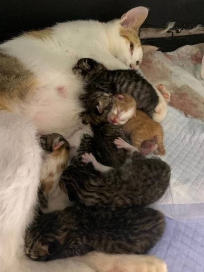 Os gatinhos nasceram em um dia de tempestade. (Foto: Arquivo Pessoal/Angela Sy)