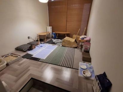 A família felina recebeu um lugar espaçoso para poderem brincar livremente. (Foto: Arquivo Pessoal/Angela Sy)