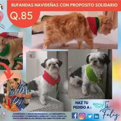 Doña Any faz parte do programa de empreendedorismo e desenvolvimento de comerciantes informais! Começou com a venda de lenços para cães e gatos. (Foto: Instagram/sefelizguate)