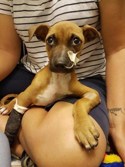O menino percorreu uma das comunidades mais pobres da África do Sul para salvar o cachorrinho. (Foto: Facebook/Tin Can Town)