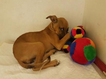 A ONG prometeu ao menino salvar a vida da cachorrinha e encontrar um novo lar. (Foto: Facebook/Tin Can Town)