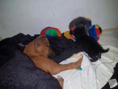 Os resgatadores a animavam Nanuk com visitas de gatinhos adotivos e, no sexto dia, ela melhorou. (Foto: Facebook/Tin Can Town)