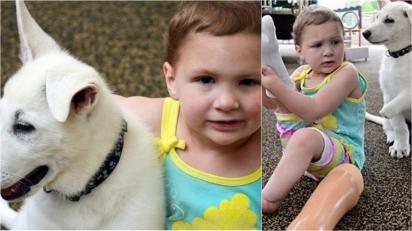 Cachorro que seria sacrificado por não ter as patas dianteiras é adotado por menina que possui a mesma deficiência. (Foto: Reprodução / Catersnews.com)