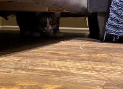 A parte inferior do estofado não era fechado e foi onde o gatinho travesso se escondeu. (Foto: Arquivo Pessoal/Caylee Gilson)