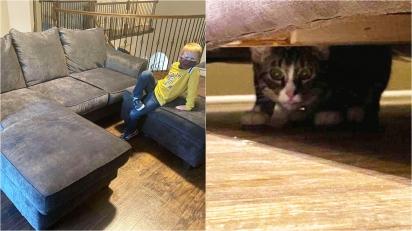 Mulher compra sofá e encontra gatinho que veio de brinde. (Foto: Arquivo Pessoal/Caylee Gilson)
