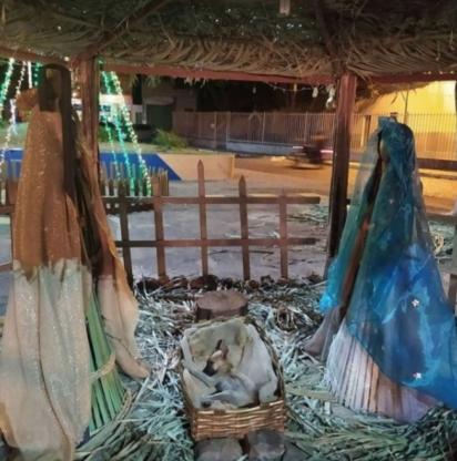 O filhote de cachorro de rua estava muito bem acomodado na manjedoura. (Foto: Arquivo Pessoal/Nádia Rosângella)