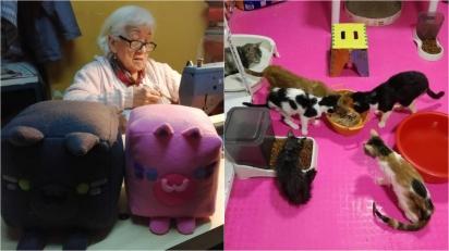 Senhora de 88 anos confecciona gatinhos de pelúcia e doa parte da renda para abrigo que acolhe mais de 100 gatos. (Foto: Reprodução/Wapa)