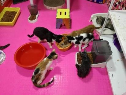 Dora destina parte do lucro das vendas a abrigo de animais com mais de 100 gatos resgatados. (Foto: Reprodução/Wapa)