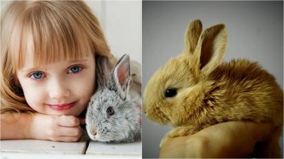Pesquisadores da Unesp publicam estudo sobre a expressão da dor em coelhos. (Foto: Divulgação/Pixabay)