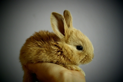 Os resultados do estudo são a base para a construção de uma escala de avaliação de dor a partir dos comportamentos dos coelhos. (Foto: Divulgação/Pixabay)