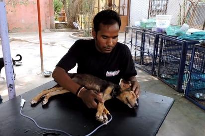 A equipe tratou a cachorrinha por 14 dias. (Foto: Reprodução Youtube/Animal Aid Unlimited, India)