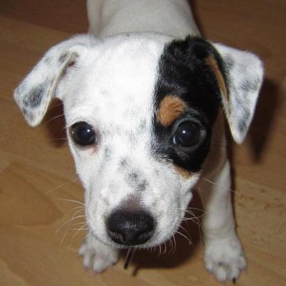 O cachorro Diamond vive na Islândia, Europa com o seu dono Gunnar Kr Sigurjónsson.(Foto: Facebook/Gunnar Kr Sigurjónsson)