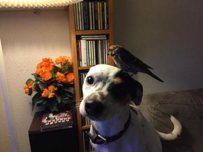 A insistência de Diamond com o seu dono era para lhe mostrar o pássaro caído na varanda. (Foto: Facebook/Gunnar Kr Sigurjónsson)