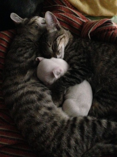 Os gatinhos adotaram o pequeno Nicolas. (Foto: Arquivo Pessoal/Ale Oviedo)