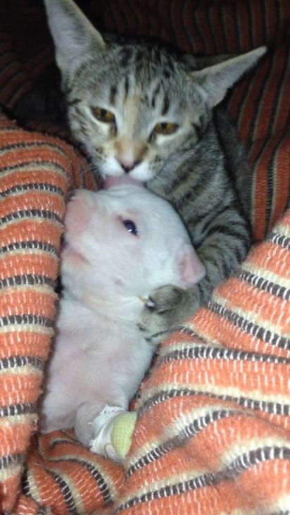 Os gatinhos protegem Nicolas como se fossem o seu filhote. (Foto: Arquivo Pessoal/Ale Oviedo)