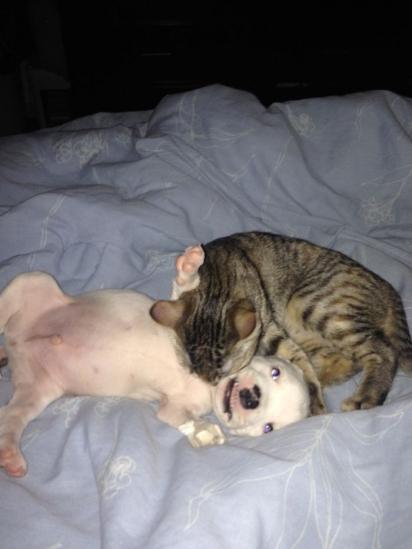 Nicolas e os gatinhos adoram brincar juntos. (Foto: Arquivo Pessoal/Ale Oviedo)