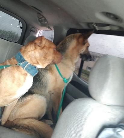 Os dois amigos foram resgatados, encaminhados para o veterinário e posteriormente foram levados para o abrigo de animais. (Foto: Facebook/ The Abandoned Ones)