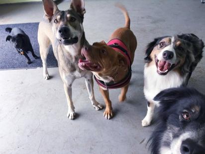 Clover é um cachorro feliz e agitado, adora brincar com seus amigos. (Foto: Facebook/ The Abandoned Ones)