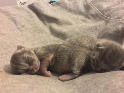Os filhotinhos ainda não receberam nomes. (Foto: SWNS/Kirsty Flann)