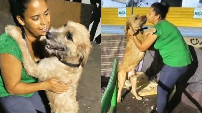 Mulher passou a morar na rua com seus cachorros após ser despejada. (Foto: Reprodução Facebook/Wellington Santos via Doacao e adocao de pets Rj)