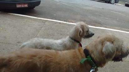 Moradores de rua se ofereceram para cuidar dos cachorros de Vanessa enquanto ela procurasse um emprego. (Foto: Facebook/ Isaiane Silva via Eu amo cachorros)