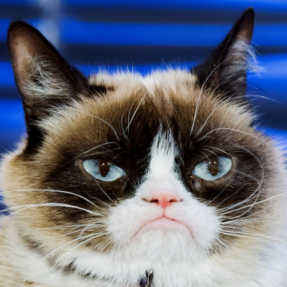 A gata mais famosa da internet. (Foto: Facebook/The Official Grumpy Cat)