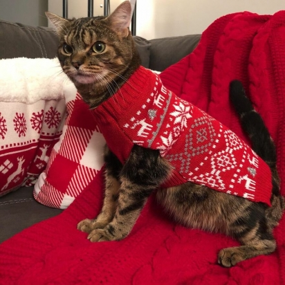 Giggles preparado para o Natal. (Foto: Instagram/gigglestheangrycat)