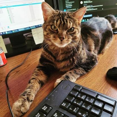 Giggles adora trabalhar com o seu dono. (Foto: Instagram/gigglestheangrycat)