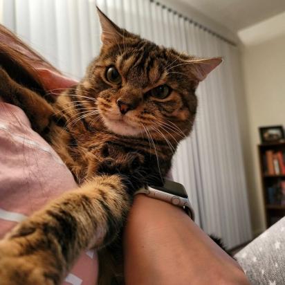 Acho que Giggles não gosta de carinho. (Foto: Instagram/gigglestheangrycat)