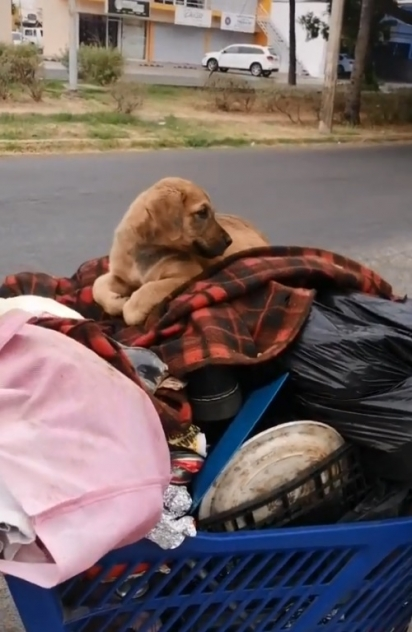 A cadelinha La Traviesa estava dois dias sem comer o que preocupou Manuel. (Foto: TikTok/@chemanimals)