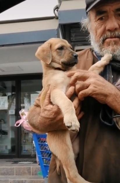 Morador de rua pediu ajuda para a sua cachorrinha à um grupo de veterinários que passavam no local onde vivem. (Foto: TikTok/@chemanimals)