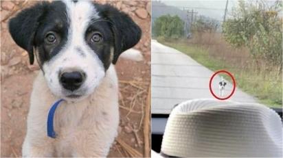 Cachorrinho abandonado em estrada corre atrás de carro pedindo uma segunda chance. (Foto: Reprodução Youtube/The Orphan Pet)