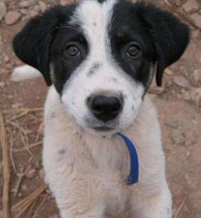Valia Orfanidou encontrou o filhote Bandit abandonado na zona rural da Grécia. (Foto: Reprodução Youtube/The Orphan Pet)