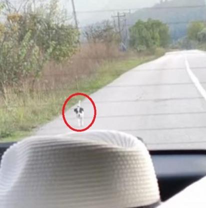 Ao ver o carro o cachorrinho saltou para fora de alguns arbustos e começou a correr atrás do veículo da escritora. (Foto: Reprodução Youtube/The Orphan Pet)
