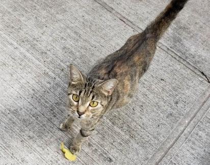 A gatinha se aproximou da voluntária pedindo ajuda. (Foto: Facebook/@TheKittenBakery)