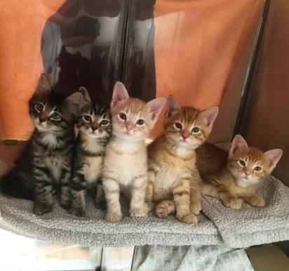 Os cinco gatinhos estão recebendo todo o amor de Kaitlyn enquanto aguardam um lar definitivo. (Foto: Facebook/@TheKittenBakery)