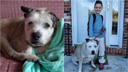 Mulher é motivada pelo filho a mudar de casa para poder acolher cão de resgate. (Foto: Facebook/Kathleen Marie via Dogspotting Society)