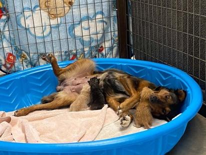 A tentativa de consolar a cachorrinha foi aproximá-la de filhotes de gatos órfãos. (Foto: Facebook/Sunshine Dog Rescue)